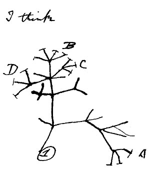 """Charles Darwin's famous """"tree of life"""" sketch showing his theory of how species connect along branches of shared ancestry. A strong central branch diverges into several off shoots which branch into yet further off shoots."""
