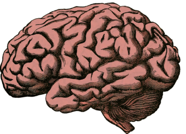 a drawing of a brain