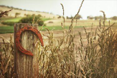 A horse shoe in a field